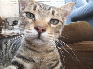 A Cat(Tel Aviv)4