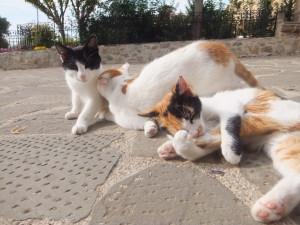 Cats(Meteora)3