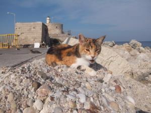 A Cat(Rodos)20