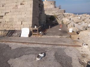 Cats(Rodos)14