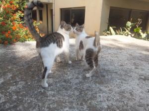 Cats(Rodos)2