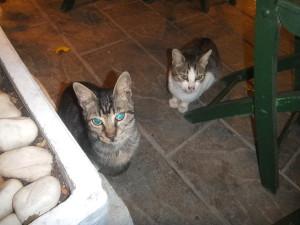 Cats(Rodos)20